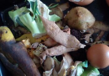 Día Internacional de la Conciencia de la Pérdida y el Desperdicio de Alimentos